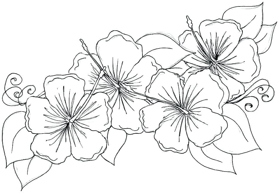 948x656 Flower Coloring Pages For Adults Or Free Printable Coloring Pages