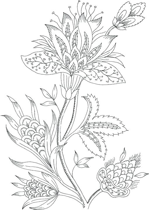 511x720 Free Printable Coloring Pages For Adults Free Printable Color