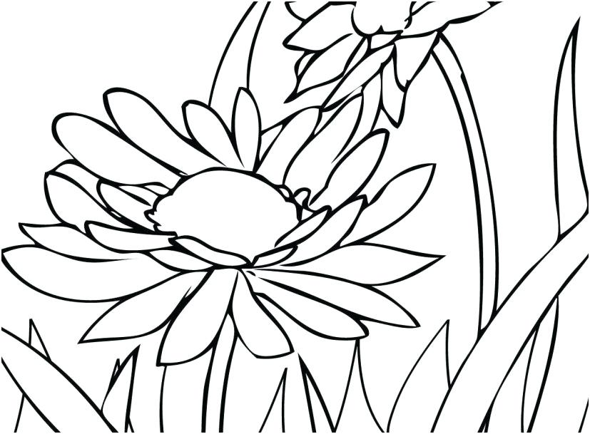 827x609 Adult Coloring Book Flowers