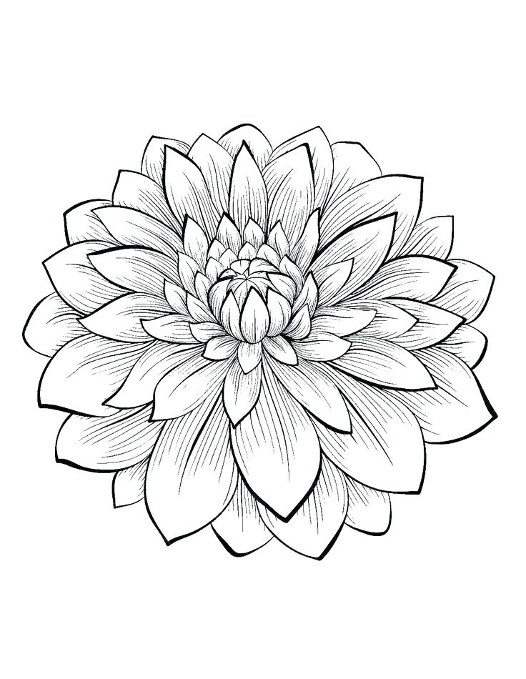 736x950 Coloring Pages Adults Coloring Pages Flower Flower Coloring Pages