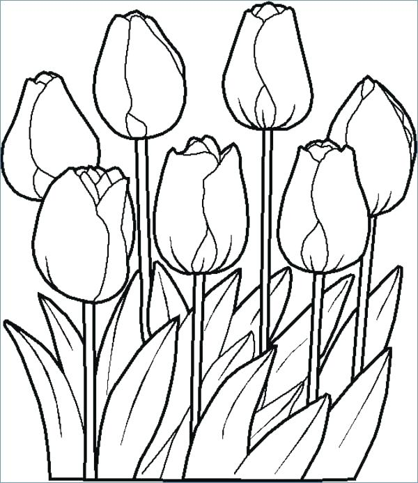600x693 Flower Coloring Pages To Print Spring Flowers Coloring Pages