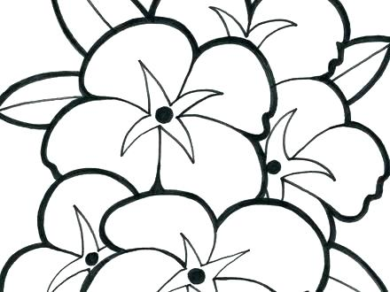 440x330 Hawaiian Flower Coloring Sheets Free Printable Flowers Pages