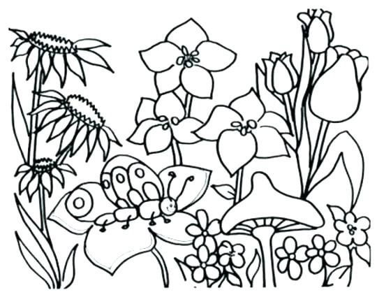 550x425 Spring Coloring Pages Preschool Spring Coloring Pages