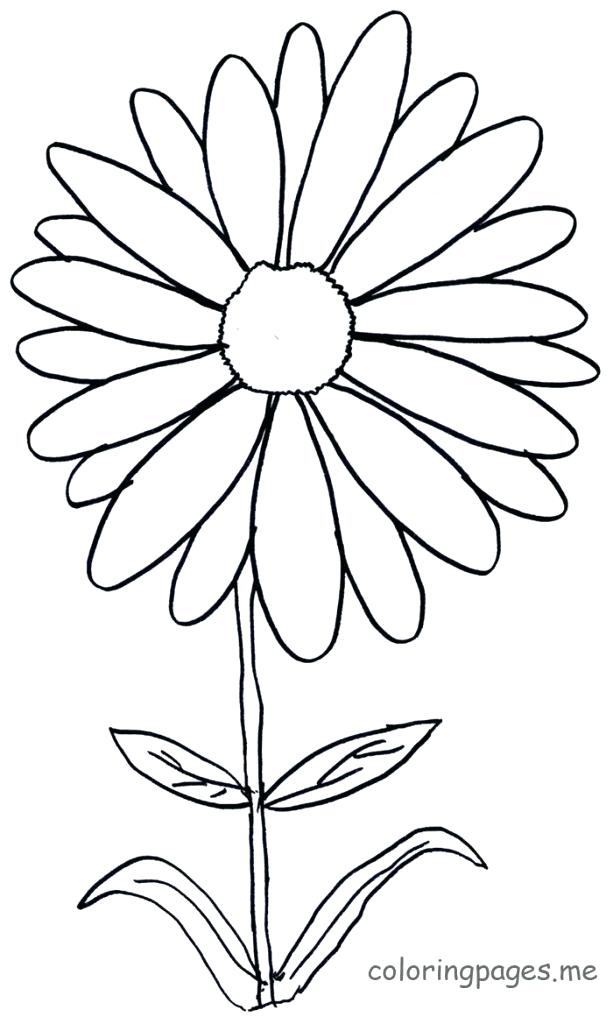 613x1024 Flower Coloring Pages Flowers Coloring Pages Daisy Flower Coloring