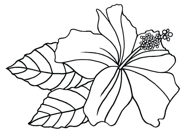600x454 Hawaiian Coloring Pages