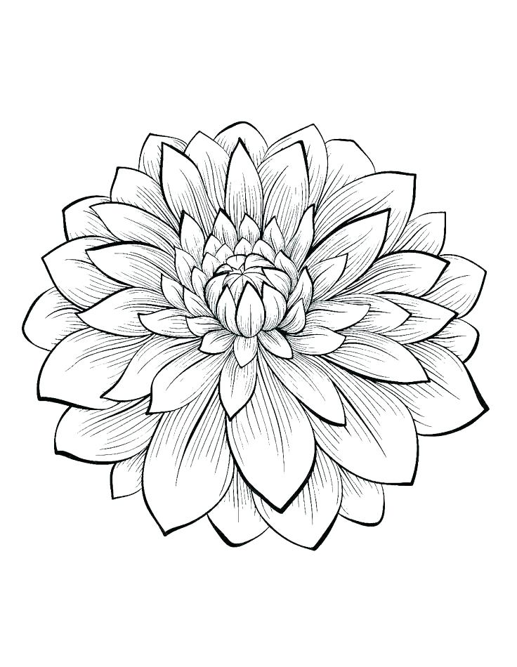 736x950 Best Of Flower Coloring Pages Pdf Or Cool Flower Coloring Pages