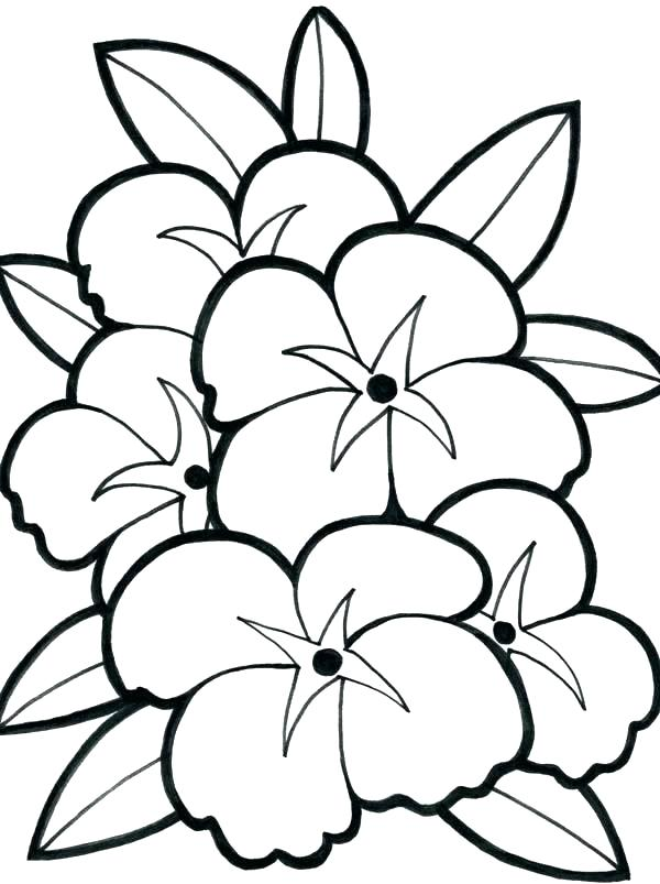 600x803 Hibiscus Flower Coloring Pages Hibiscus Flower Picture Coloring