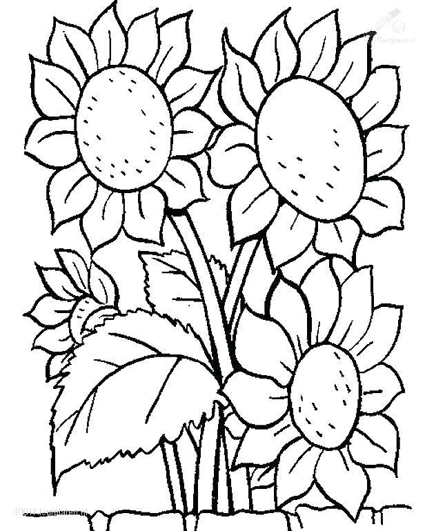 616x770 Coloring Pages Flowers Printable Coloring Image Unique Flower