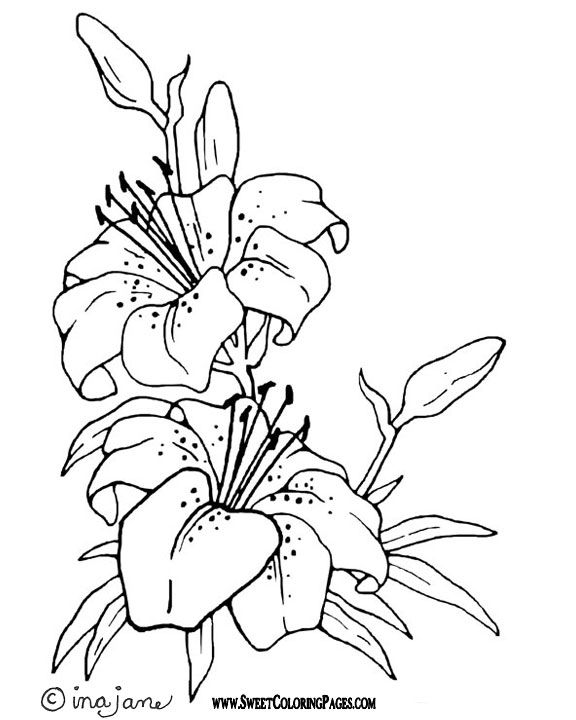 576x720 Flower Outline For Colouring Best Flower Coloring Pages Ideas