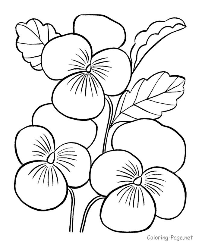 670x820 Free Flower Coloring Pages For Kids