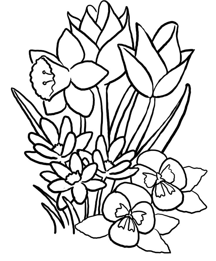736x887 Spring Flower Coloring Pages Spring Flowers Coloring Pages Sheets