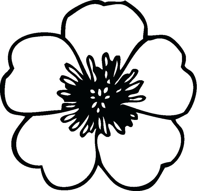 800x774 Flower Colouring In Pictures Jasmine Flower Colouring Pages Daisy
