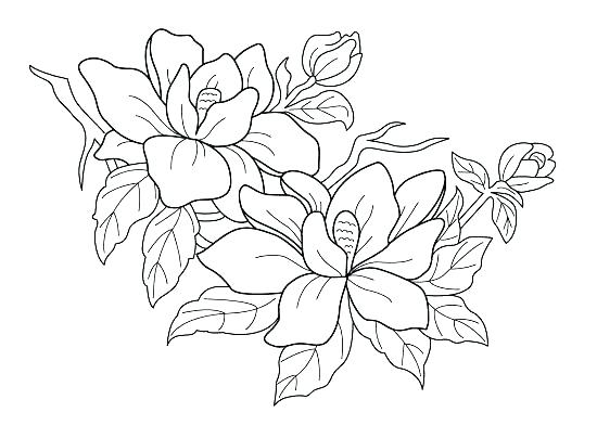 550x392 Realistic Flower Coloring Pages Free Printable Realistic Flower
