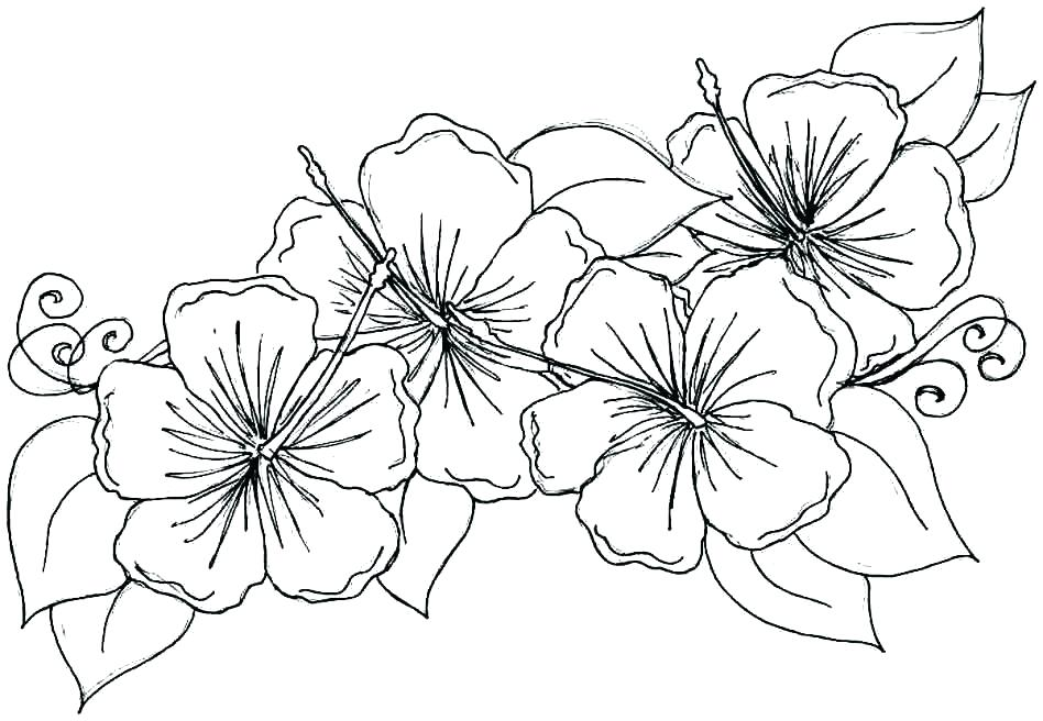 948x656 Flower Coloring Pages Printable