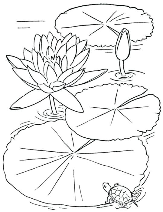 539x699 Flower Coloring Pages To Print Beauty Adult Flower Coloring Pages