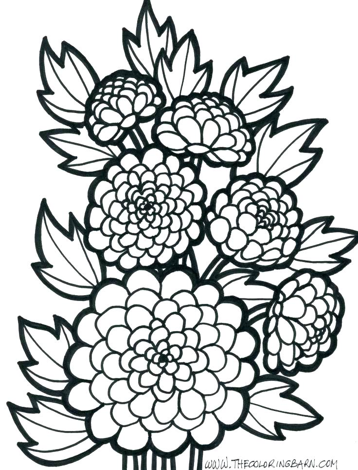 736x965 Flower Coloring Pages Easy