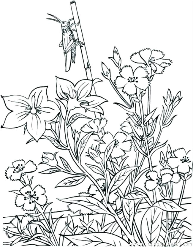 650x832 Flower Garden Coloring Page Flower Garden Coloring Page Flower