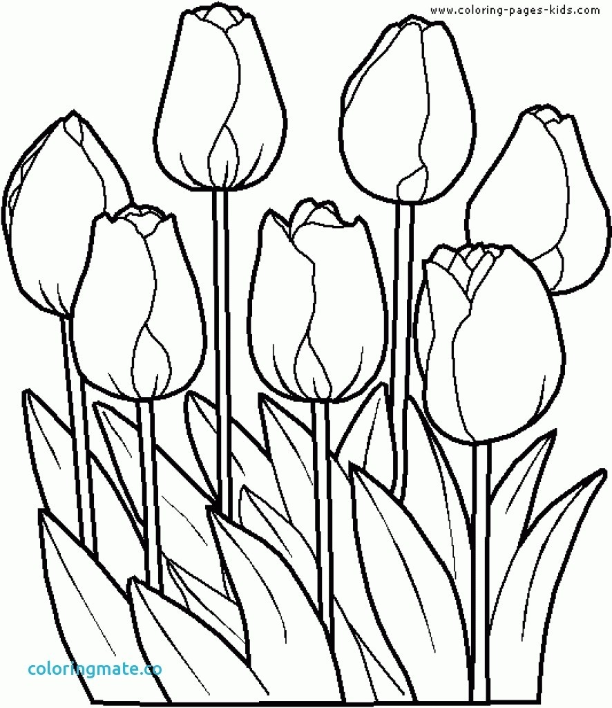 886x1024 Coloring Pages Flower Garden Fresh Flower Garden Coloring Pages