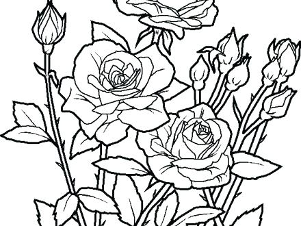 440x330 Flower Garden Coloring Page Coloring Pages Of A Flower Coloring