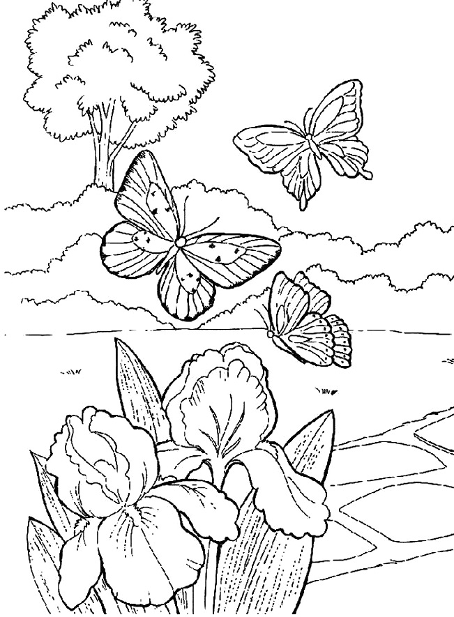651x885 Beautiful Butterfly In The Garden Coloring Pages Coloring Page