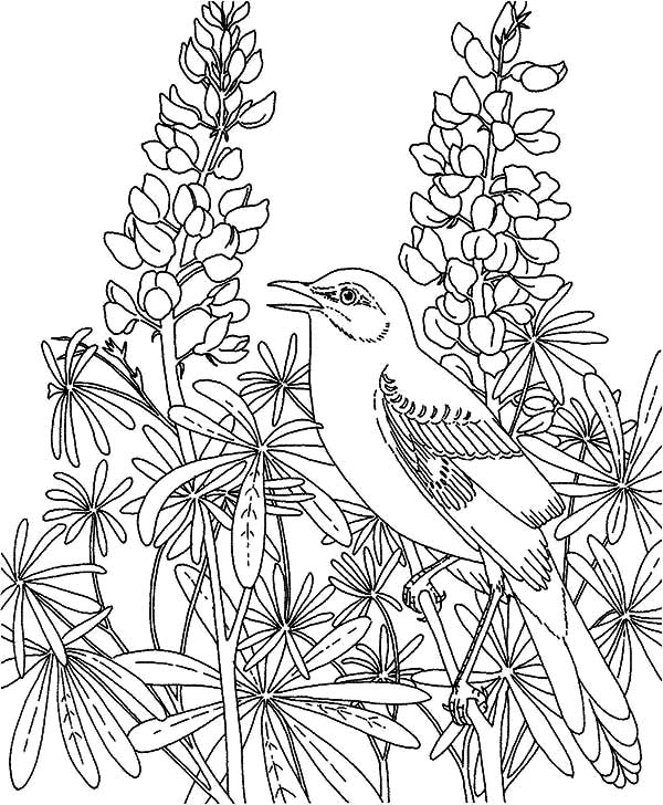 Flower Garden Coloring Pages Printable At Getdrawingscom Free For