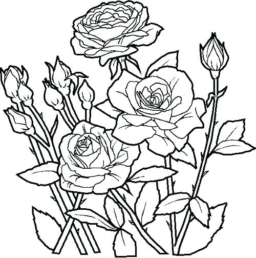 500x503 Free Printable Flower Coloring Pages Flower Coloring Pages