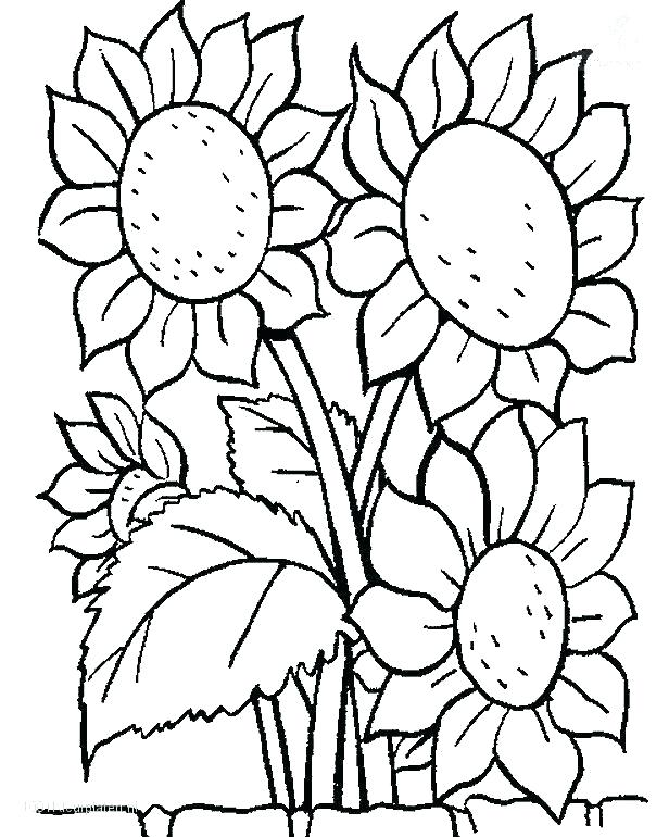 616x770 Printable Flower Coloring Pages Usedauto Club