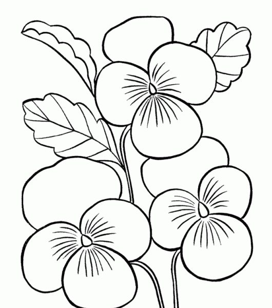 530x600 Coloring Pages For Kids Flowers Coloring Pages For Kids Flowers