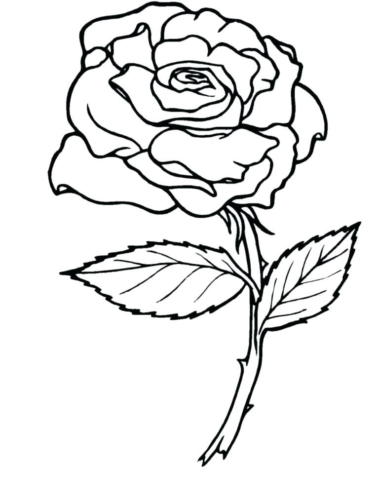 766x1021 Rose Coloring Pages Red Rose Coloring Page Rose Coloring Pages