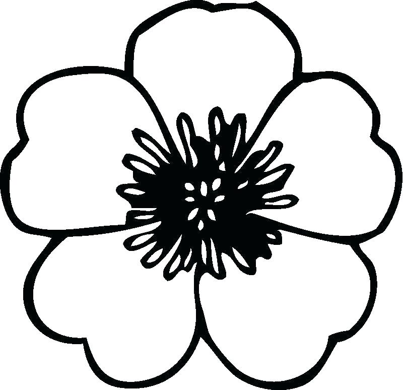 800x774 Flowers Coloring Pages Colors In Coloring Pages Of A Flower