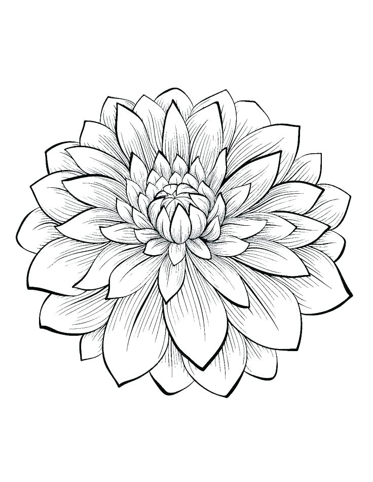 736x950 Simple Flower Coloring Pages Coloring Pages Simple Flowers Flower