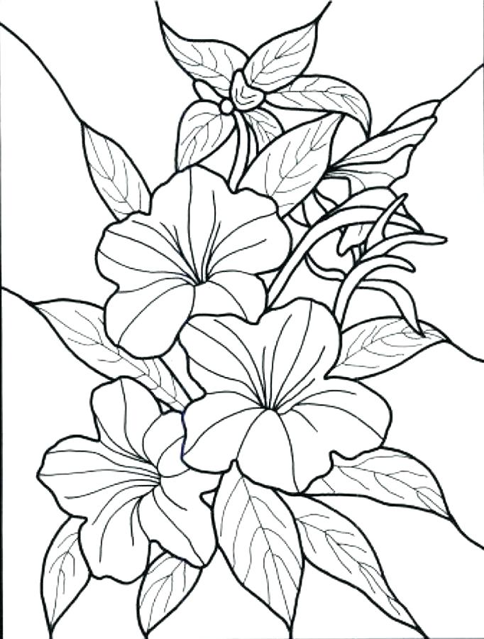 682x900 Free Flower Coloring Pages Pdf Coloring Pages Collection