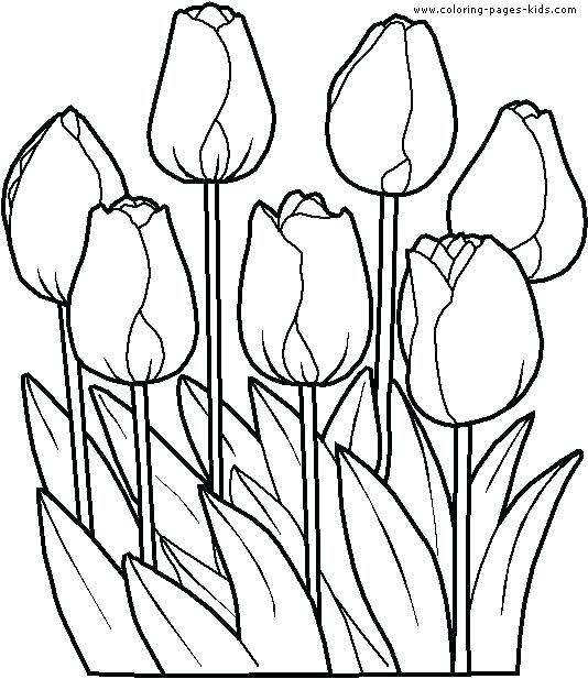 534x617 Free Flower Coloring Pages Pdf