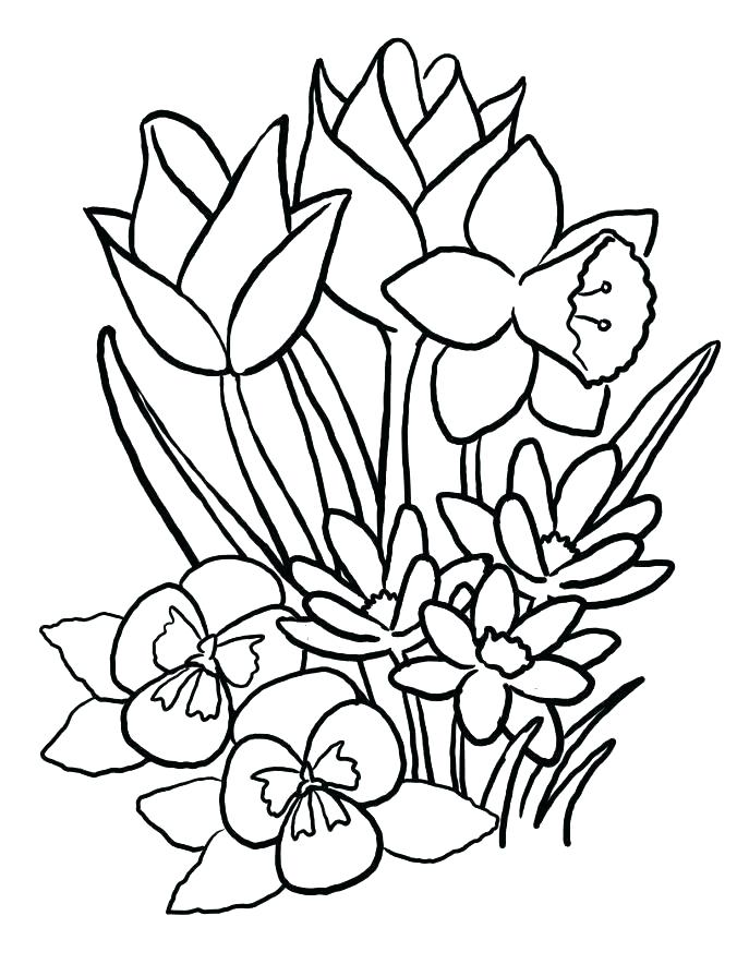 687x884 Coloring Pages Of A Flower Flower Color Page Best Flower Coloring