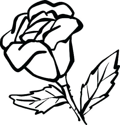 390x405 Rose Flower Coloring Pages Amazing Rose Flower Coloring Pages Rose