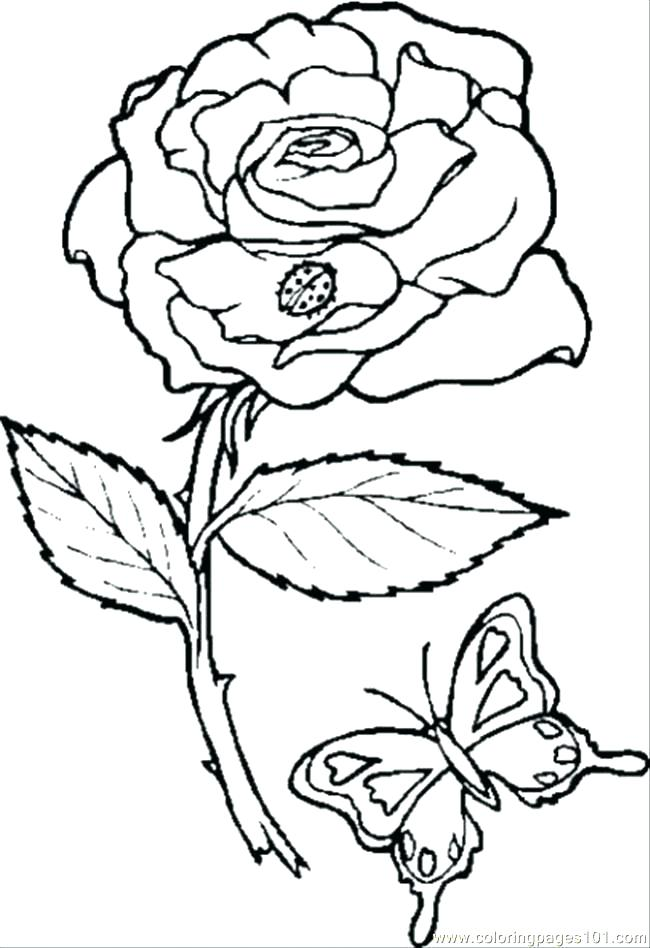 650x948 Rose Flower Coloring Pages Coloring Pages Rose Flowers Coloring