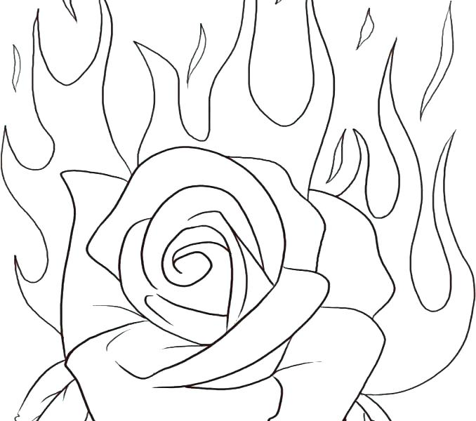678x600 Rose Flower Coloring Pages Flowers Coloring Pages Rose Flower