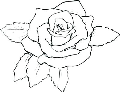 400x307 Rose Flower Coloring Pages For Adults Flower Color Pages Flower