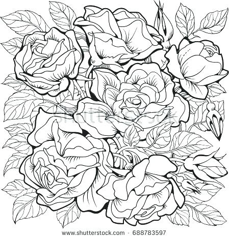 449x470 Rose Flower Coloring Pages Plus Flowers Coloring Pages Rose