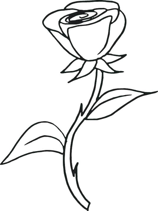 535x716 Roses Coloring Pages Printable Coloring Pages Kids Flowers