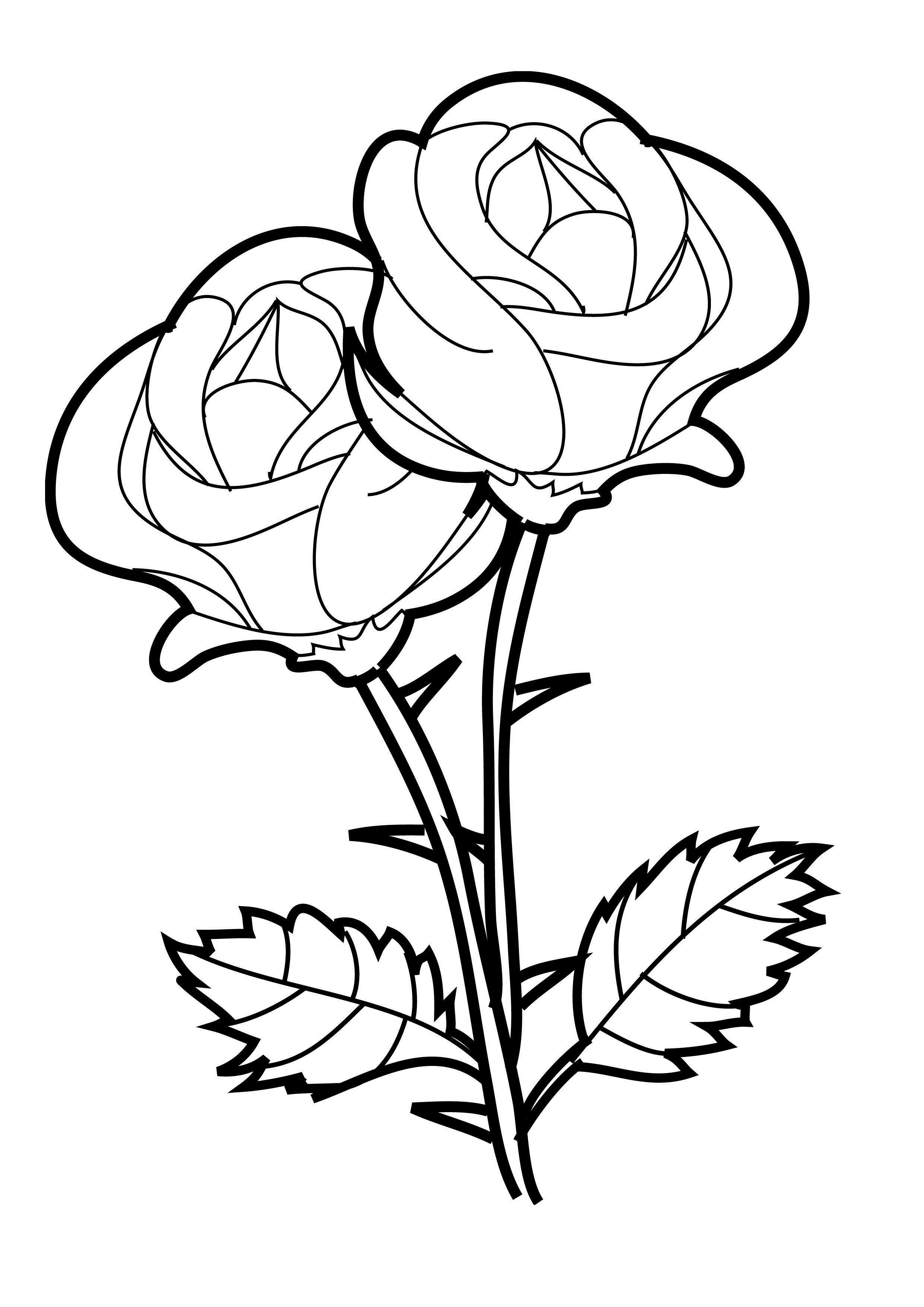 2480x3508 Coloring Pages Rose Beautiful Rose Two Flowers Coloring Page Happy