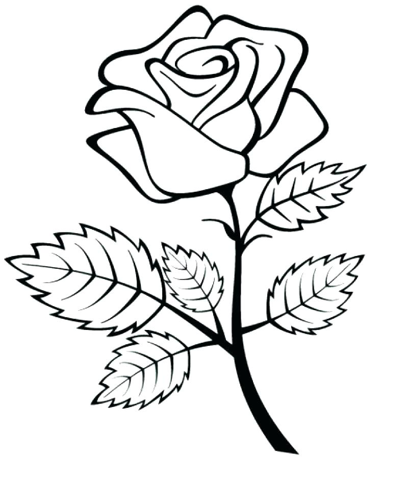 800x951 Coloring Pages Rose Roses Coloring Pages Rose Coloring Sheets Rose