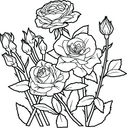 500x503 Free Printable Flowers Coloring Pages Yoschool Site