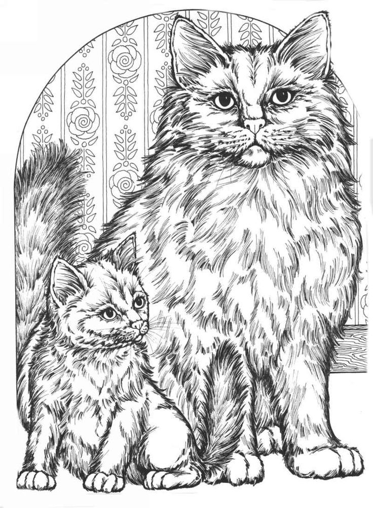 Fluffy Cat Coloring Pages at GetDrawings | Free download