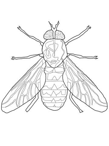 360x480 Fly Coloring Pages Horse Fly Coloring Page Free Printable Coloring