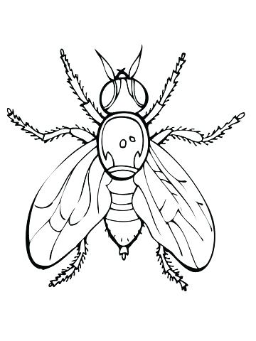 360x480 Fly Guy Coloring Pages Fly Coloring Page Click To See Printable