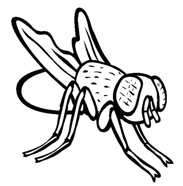 600x611 Fly Coloring Page Disgusting Fly Coloring Page Hi Fly Guy Coloring