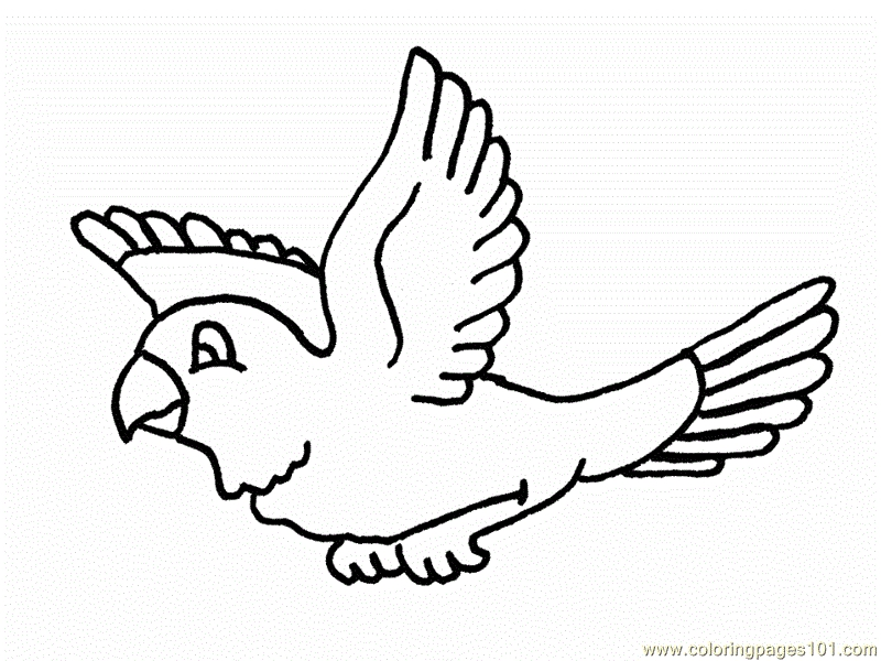 800x600 Flying Birds Coloring Pages For Kindergarten Color Zini Flying