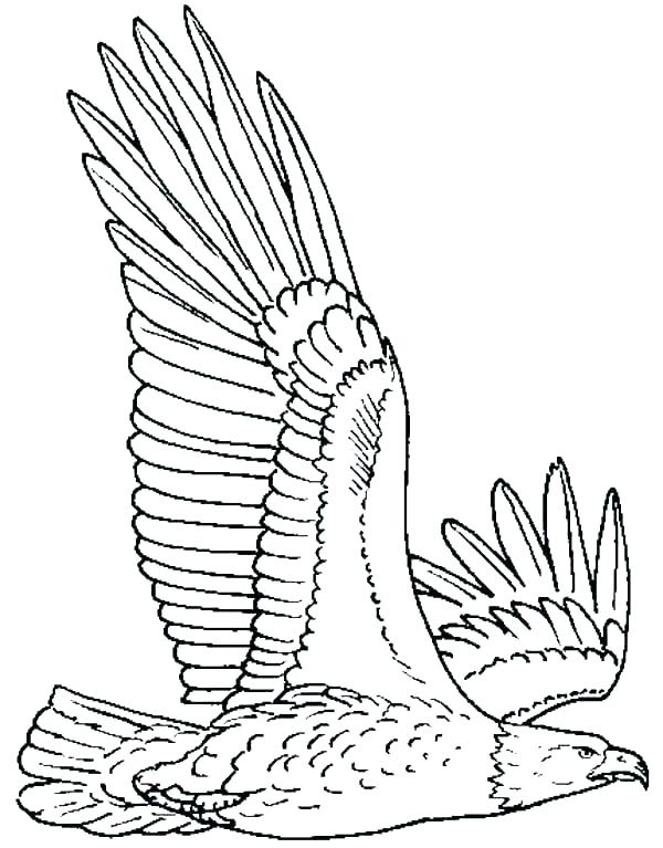 600x767 Coloring Pages Eagle Eagles Coloring Pictures Eagles Coloring