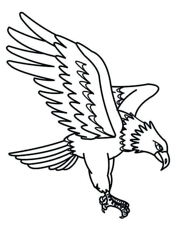 600x775 Draw Eagle Coloring Page For Your Download Pages Realistic Bald